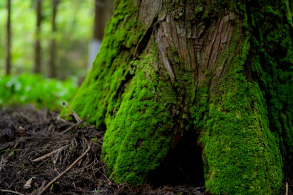 寂光の滝、苔が綺麗、AF-S Nikkor 58mm f/1.4Gで撮影