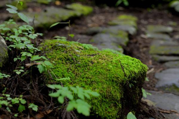 寂光の滝、苔が綺麗な石段、AF-S Nikkor 58mm f/1.4G