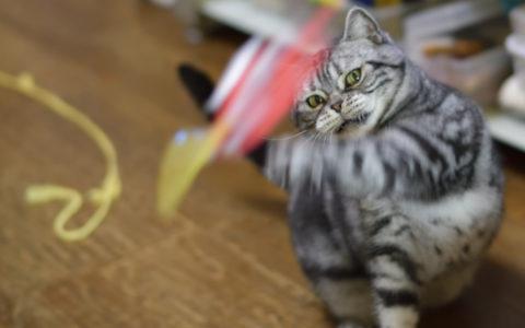 猫パンチ、AF-S Nikkor 58mm f/1.4Gで撮影