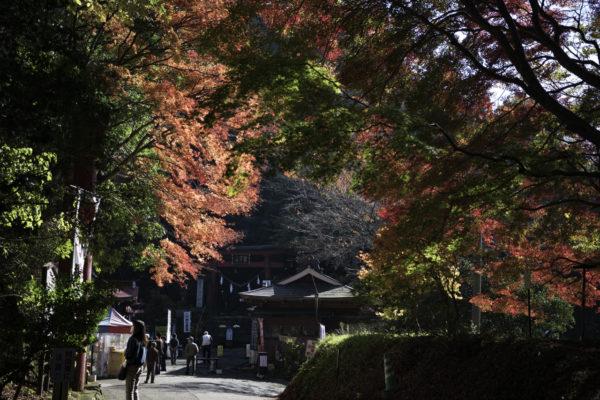 鷲子山上神社、ふくろう神社
