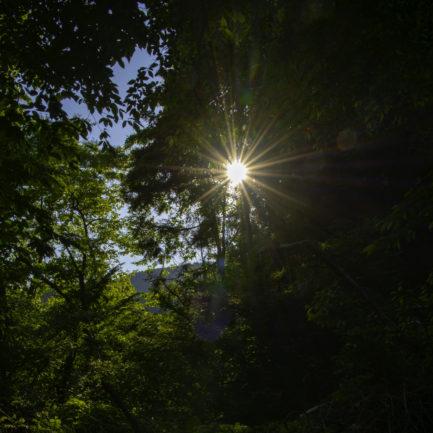 森の中で光芒みっけ