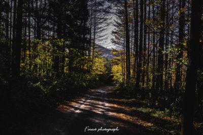 達沢不動滝の途中の林道