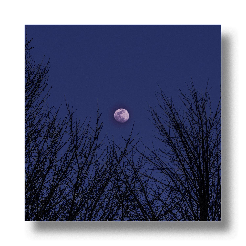 前景をシルエットにしたお月様の写真